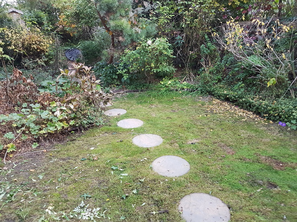 The tired scruffy garden before we got to work